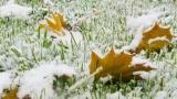 Первый снег пошел в Подмосковье